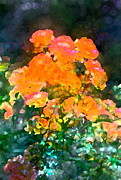 Floral Prints - Rose 215 Print by Pamela Cooper
