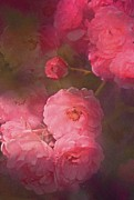 Floral Metal Prints - Rose 217 Metal Print by Pamela Cooper