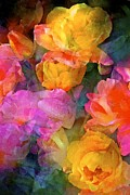 Orange Roses Posters - Rose 224 Poster by Pamela Cooper