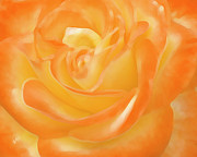 Tangerine Digital Art Prints - Rose Print by Ben and Raisa Gertsberg
