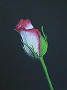 Sympathy Drawings Metal Prints - Rose Bud Metal Print by Marna Edwards Flavell