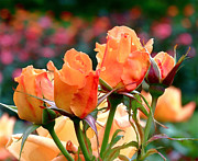 Colorful Roses Photos - Rose Bunch by Rona Black
