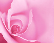 Gentle Digital Art - Rose Close Up - Pink by Natalie Kinnear