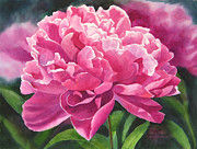 Peonies Paintings - Rose Colored Peony Blossom by Sharon Freeman