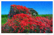 Roses Framed Prints - Rose Covered Shed Framed Print by Lar Matre