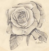 Drop Drawings Originals - Rose Drawing by Nancy Beckerdite
