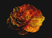 Orange Digital Art Originals - Rose Fantasy by Ann Powell