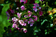 Susanne Van Hulst - Rose Garden 2