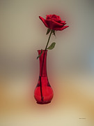 Photographs With Red. Digital Art Prints - Rose in a Vase Print by Thomas Woolworth