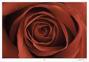 Lar Matre Metal Prints - Rose Metal Print by Lar Matre