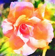 Roses - Rose on Canvas  by Cathie Tyler