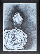 Fragrance Drawings Prints - Rose Print by Paavan P S Ahuja