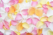 Yellow Petals Posters - Rose petals background Poster by Elena Elisseeva