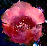 Prickly Rose Posters - Rose Prickly Pear Poster by Beverly Guilliams