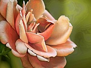 Flora Digital Art Originals - Rose Redone by Camille Lopez