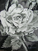 Terry Cipelletti - Rose