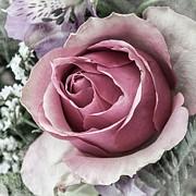 Thomas Christoph - rose