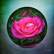 Paper Weight Prints - Rose through the Glass Print by Mary Machare