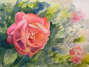 Todd Derr - Rose