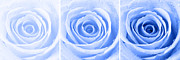 Blue Light Digital Art Prints - Rose Trio - Blue Print by Natalie Kinnear