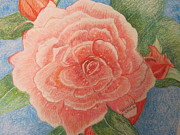Dewdrops Drawings Prints - Rose Print by Venice  Kichura