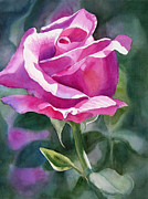 Floral Watercolor Painting Originals - Rose Violet Bud by Sharon Freeman