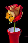 Insects Posters - Rose with butterfly in red vase Poster by Garry Gay