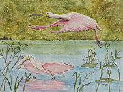 Spoonbill Drawings Metal Prints - Roseate Spoonbill In Flight Metal Print by John Edebohls