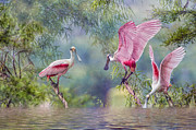 Trio Framed Prints - Roseate Spoonbill Trio Framed Print by Bonnie Barry