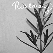 Grey Posters - Rosemary Poster by Linda Woods