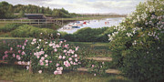 Cape Cod Paintings - Roses and Hydrangeas - Cape Cod by OMalley Keyes
