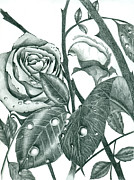 Whites Drawings Posters - Roses And Thorns Poster by Dorian Day