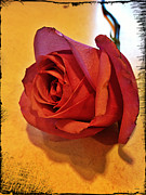 Rose Photography Posters - Roses Are Red Poster by Linda Sannuti