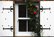Florabunda Framed Prints - Roses Around The Window Framed Print by Wendy Wilton