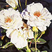 Rose Bushes Posters - Roses Blanc Poster by David Lloyd Glover