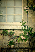 Charming Cottage Posters - Roses by Window Poster by Jill Battaglia