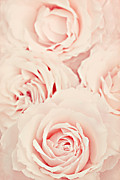 Pink Flowers. Posters - Roses Poster by Diana Kraleva