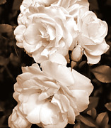 Umber Metal Prints - Roses in Sepia Monochrome Metal Print by Jennie Marie Schell