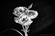 Rhonda DePalma - Roses in the Light