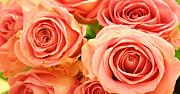 Roses Print by Sven Pfeiffer