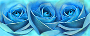 Light Fuchsia Prints - Roses Three Blue Abstract Print by Jennie Marie Schell