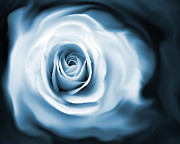 Abstract Roses Posters - Roses Whispers Blue Poster by Jennie Marie Schell