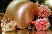Li Van Saathoff Framed Prints - Roses with sea shell Framed Print by Li   van Saathoff