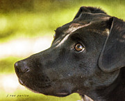 Doggy Cards Photos - Rosie the Rescue Dog by Janice Rae Pariza