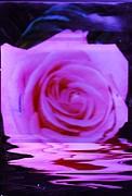 Anne-Elizabeth Whiteway - Rosy