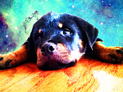 Buy Art Photo Prints - Rottie Puppy by Sharon Cummings Print by Sharon Cummings