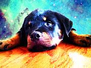 Rottie Puppy By Sharon Cummings Print by Sharon Cummings