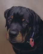 Rottweiler Dog Print by Karie-Ann Cooper