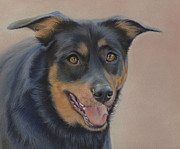 Black Pastels Framed Prints - Rottweiler - Drawing Framed Print by Natasha Denger