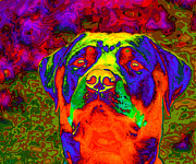 Big Eye Dog Prints - Rottweiler portrait pop art Print by Eti Reid